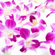 beautiful blooming orchid isolated - PhotoDune Item for Sale