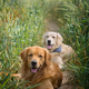 Portrait of two young beauty dogs - PhotoDune Item for Sale