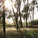 Sunset Forest - VideoHive Item for Sale