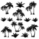Tropical Palm Trees Set Silhouettes - GraphicRiver Item for Sale