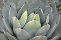 Prickly cactus leaves - PhotoDune Item for Sale