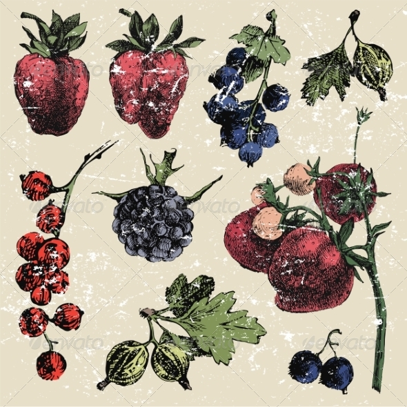 GraphicRiver Hand Drawn Berries 8197107