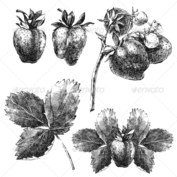 GraphicRiver Hand Drawn Strawberry Set 8197158