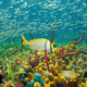 Colorful sea life underwater with shoal of fish - PhotoDune Item for Sale