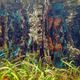 Underwater mangrove roots covered by marine life - PhotoDune Item for Sale