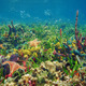 Thriving underwater marine life in tropical seabed - PhotoDune Item for Sale
