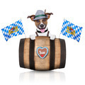 bavarian dog - PhotoDune Item for Sale