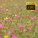 The Flower Field ( 5 pack ) - VideoHive Item for Sale