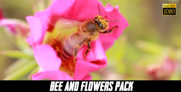 Bee And Flower 4 Pack