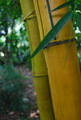 Bamboo Close Up - PhotoDune Item for Sale