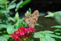 brown gray butterfly - PhotoDune Item for Sale