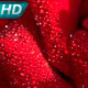 Red Rose in Dewdrop - VideoHive Item for Sale