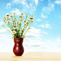 Bouquet of daisies in the jug against blue sky - PhotoDune Item for Sale