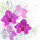 Pink Orchid - GraphicRiver Item for Sale