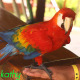 Red Parrot Sitting On A Man Arm - VideoHive Item for Sale