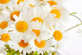 bouquet of wild daisies - PhotoDune Item for Sale