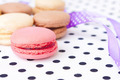 beautiful and sweet pastries macaroon - PhotoDune Item for Sale