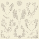 Floral Design Elements - GraphicRiver Item for Sale