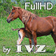 Horse Family - VideoHive Item for Sale