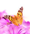 Beautiful butterfly on the flower - PhotoDune Item for Sale
