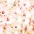 Beautiful floral background - PhotoDune Item for Sale