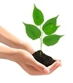 Human hands holding green tree with leaves.  - PhotoDune Item for Sale
