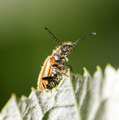 small insect in nature. macro - PhotoDune Item for Sale