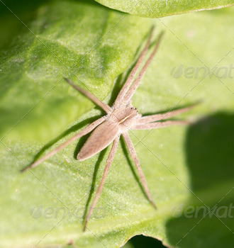 spider in nature. macro - PhotoDune Item for Sale