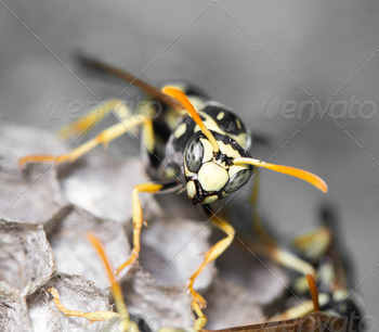 Wasp Nest with Pupae - PhotoDune Item for Sale