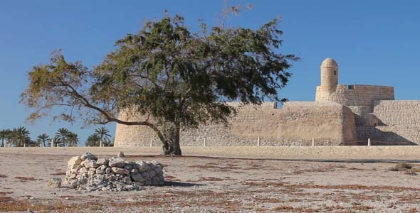 Lonely Tree Of Bahrain Fort 2