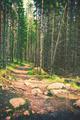 Hiking path - PhotoDune Item for Sale