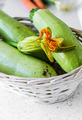 Zucchini blossom - PhotoDune Item for Sale
