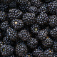 Ripe blackberries background - PhotoDune Item for Sale