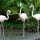 flamingos - PhotoDune Item for Sale
