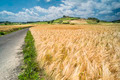 Cereal crops and farm in Tuscany - PhotoDune Item for Sale