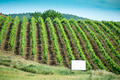 Vine plantations in Italy - PhotoDune Item for Sale