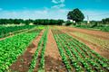 Plantations with lettuce - PhotoDune Item for Sale