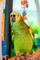 Green parrot - PhotoDune Item for Sale