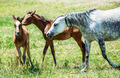 Domestic horses - PhotoDune Item for Sale
