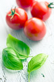 basil leaves and tomatoes - PhotoDune Item for Sale