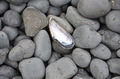 Shell and pebbles - PhotoDune Item for Sale