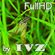Big Fly - VideoHive Item for Sale