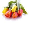 Bouquet from yellow and red tulips. - PhotoDune Item for Sale