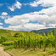 vineyard in Baden-Baden - PhotoDune Item for Sale