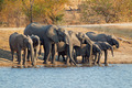 Elephants drinking water - PhotoDune Item for Sale