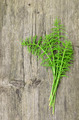 Harvested Horsetail - PhotoDune Item for Sale