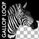 Horse Gallop - Zebra - VideoHive Item for Sale