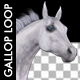 Horse Gallop - White Stallion - VideoHive Item for Sale