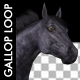 Horse Gallop - Black Stallion - VideoHive Item for Sale