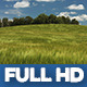Young Rye Field 1 - VideoHive Item for Sale